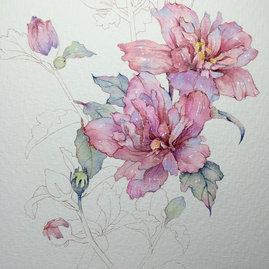 原创作品:木槿花