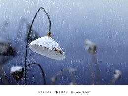 食摄马也·CHINA驰系列   廿四节气-大雪