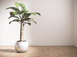 Corona真实植物材质与散射sss材质问题