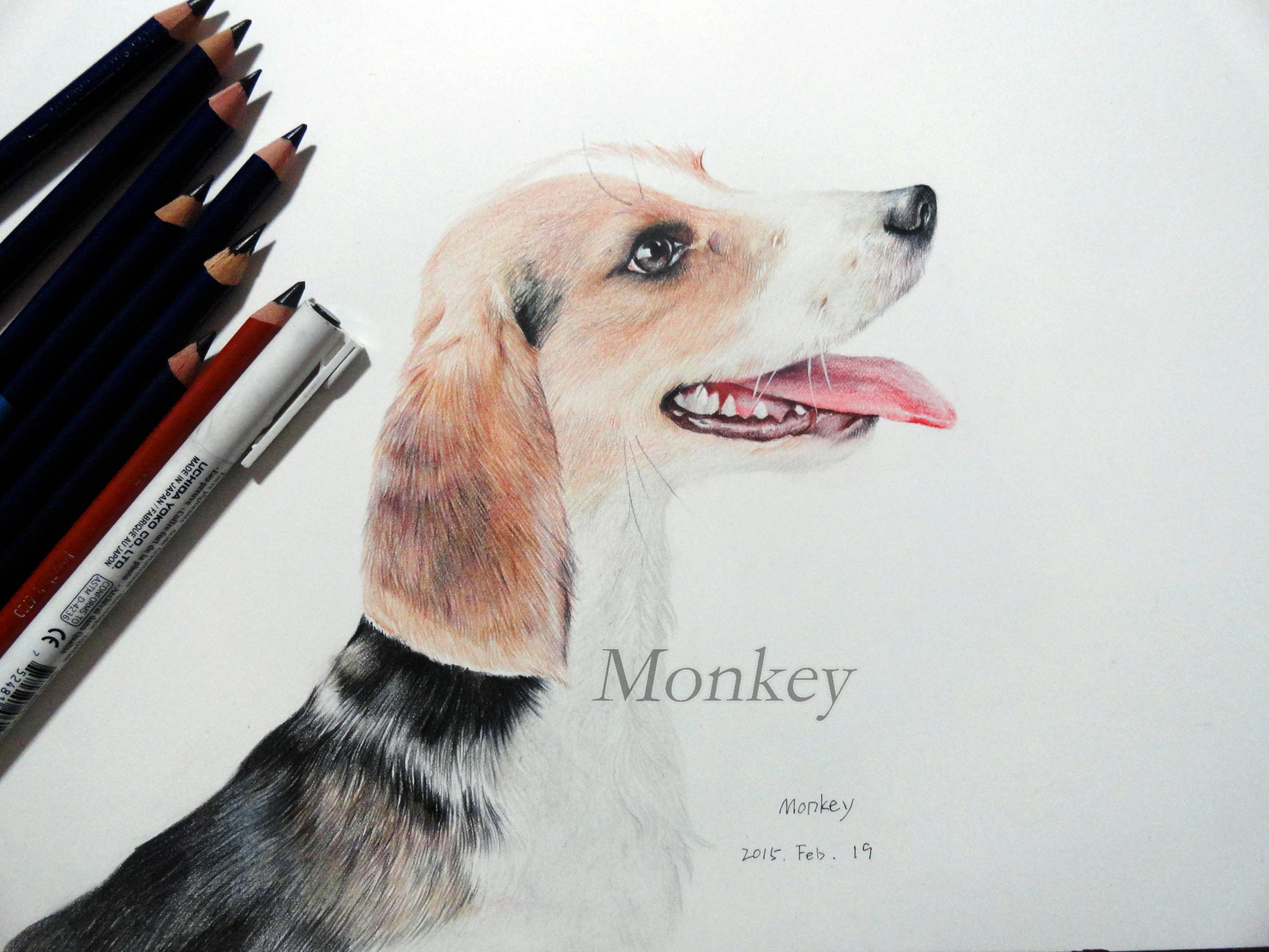 比格犬彩铅手绘
