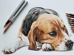 手绘-彩铅-狗狗