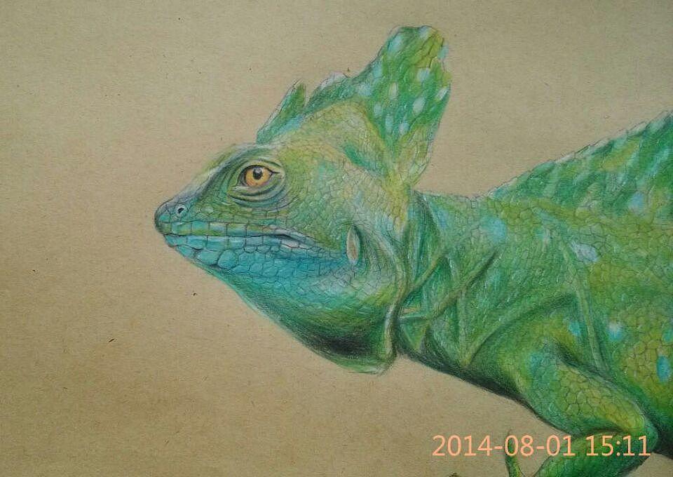 油性彩铅手绘练习