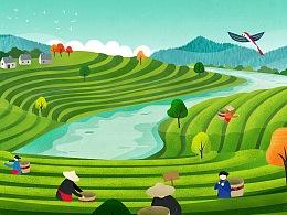 云南思茅普洱有机茶产业联盟视觉设计