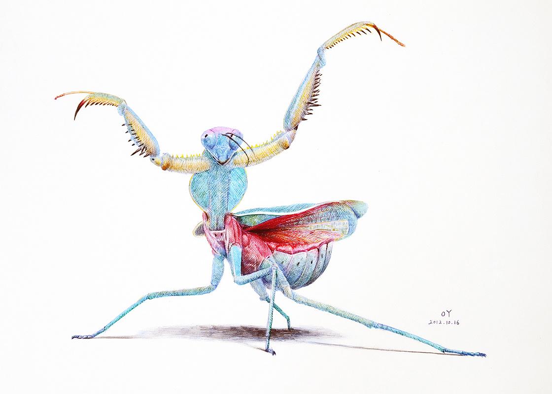 oy彩色圆珠笔画-螳螂