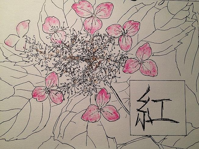 紫阳花线画 色铅笔