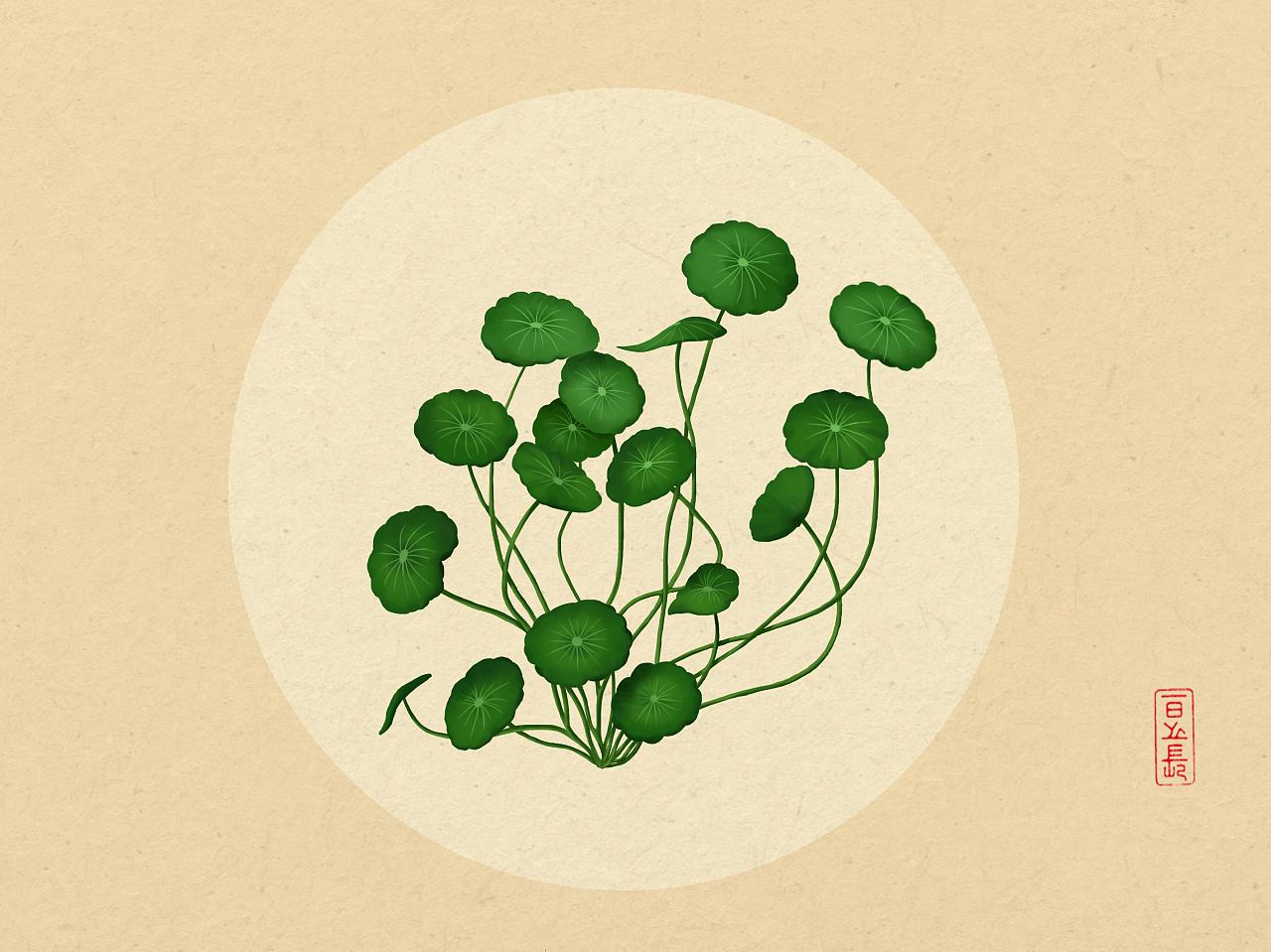 植物插画系列(三)