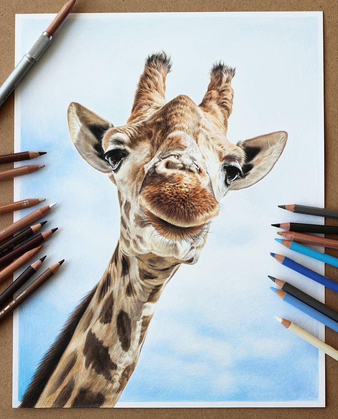 长颈鹿彩铅画_手绘-彩铅-长颈鹿|纯艺术|彩铅|Hazel_Art - 原创作品 - 站酷 (ZCOOL)