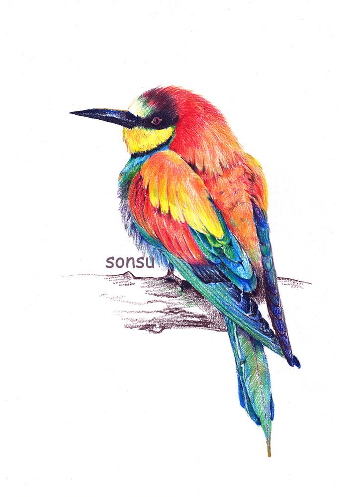 彩铅鹦鹉手绘图片大全