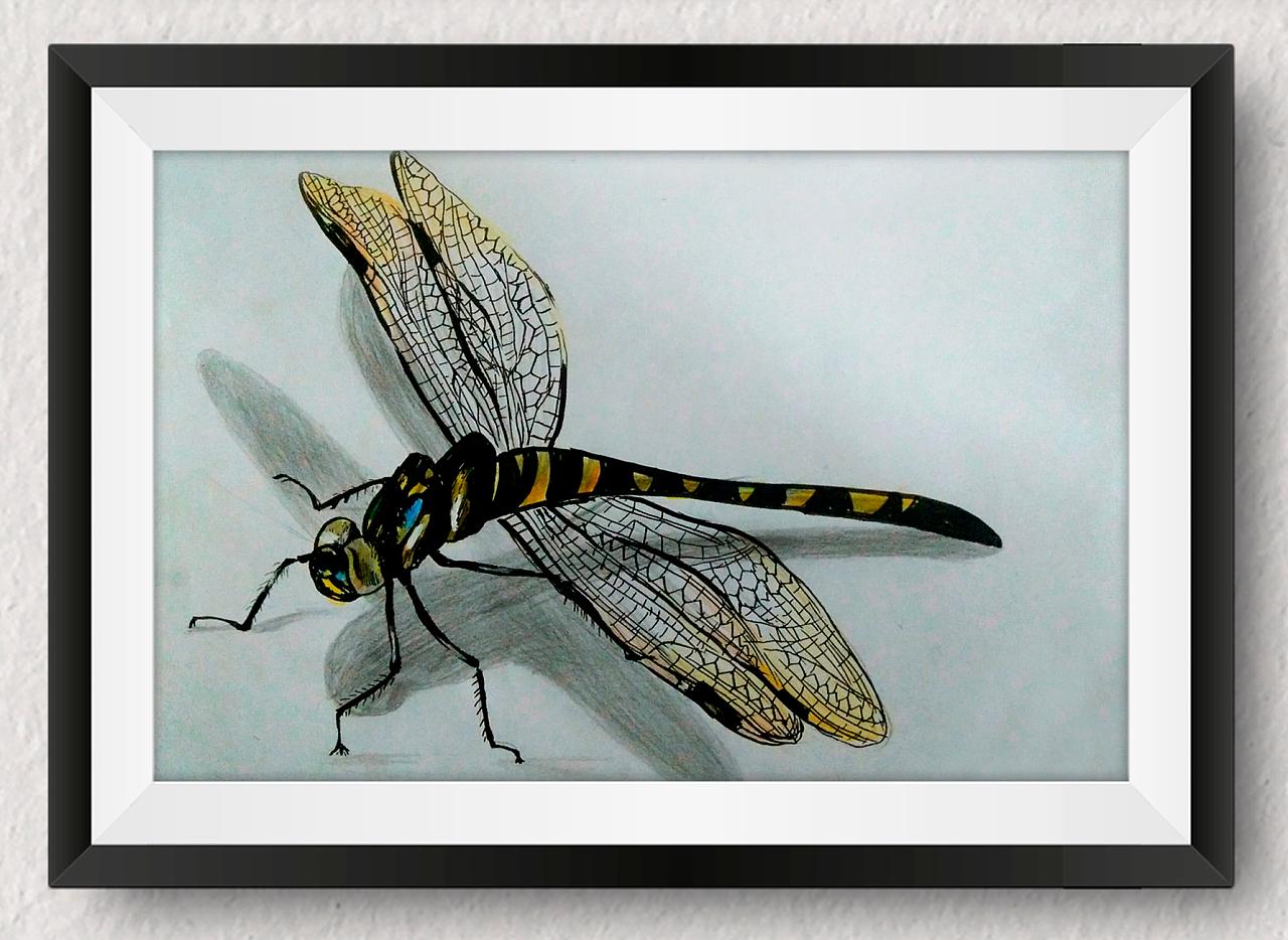 昆虫彩铅手绘