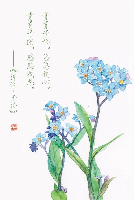 手绘花卉系列——《花·诗经》