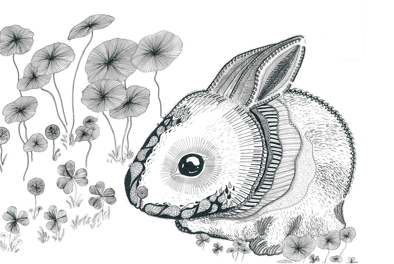 签字笔手绘 (小动物松鼠狐狸穿山甲黑叶猴兔子)图片