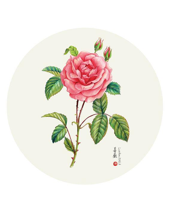彩铅手绘蔷薇.