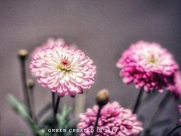 静物摄影,鲜花,家居装饰