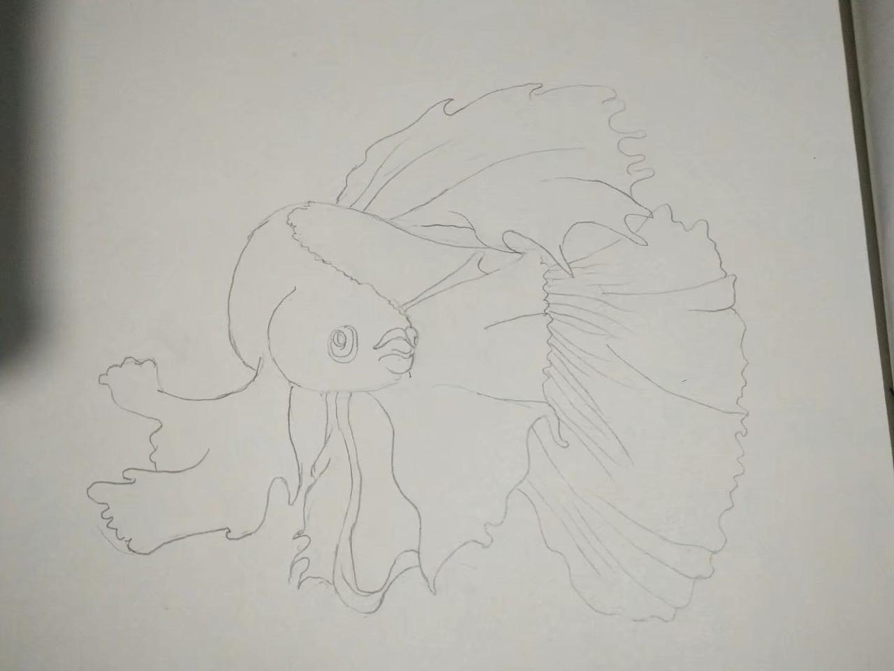 手绘金鱼|插画|插画习作|liuwf - 临摹作品 - 站酷
