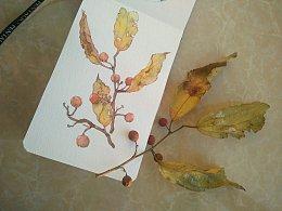 那年秋天随手捡起的小树枝