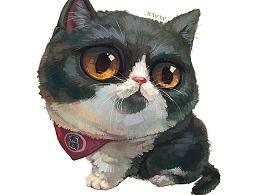 【萌宠by雪娃娃】英短猫丸子