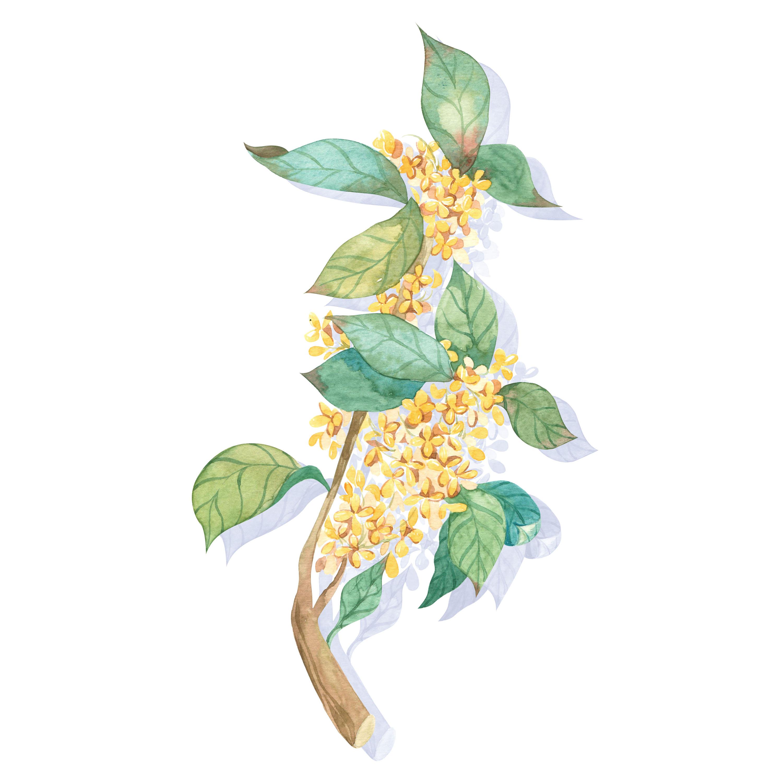 水彩植物3
