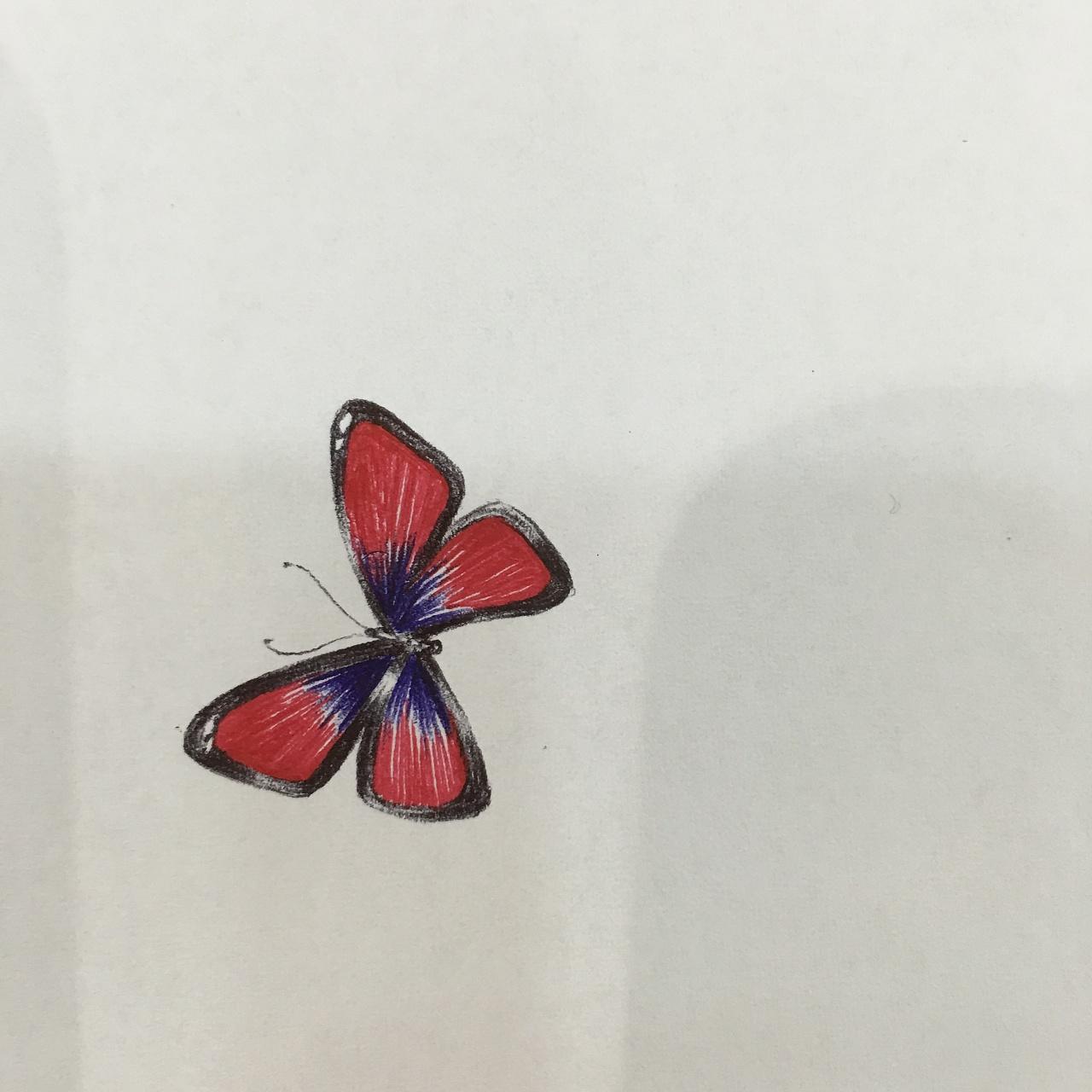 小蝴蝶图片 340712 1280x1280