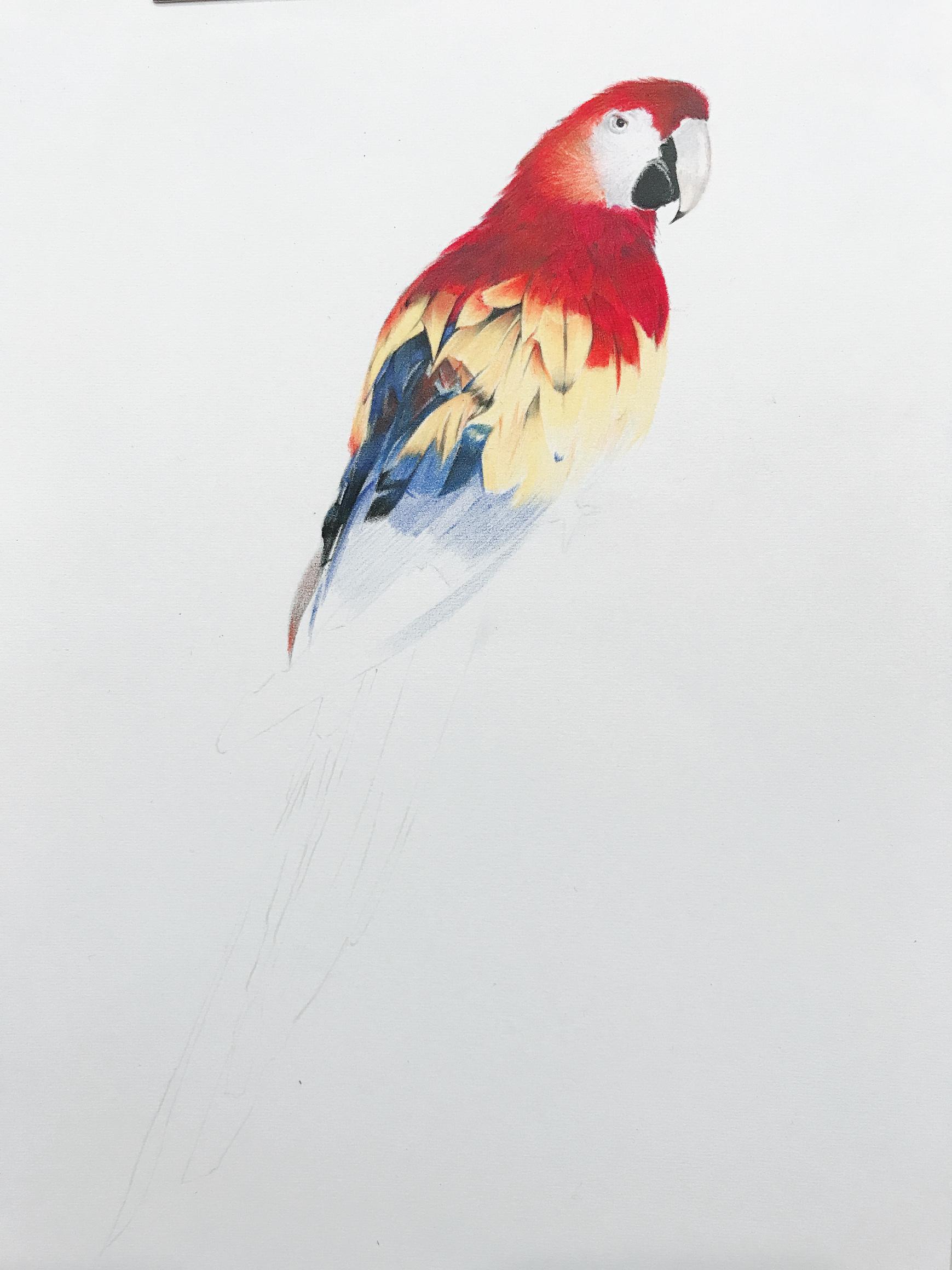 彩铅 纯艺术 彩铅 jy鲸鱼 - 原创作品 - 站酷 (zcool)图片