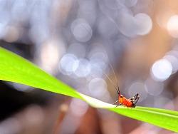 色彩斑斕的小生命-帶您欣賞微觀之旅