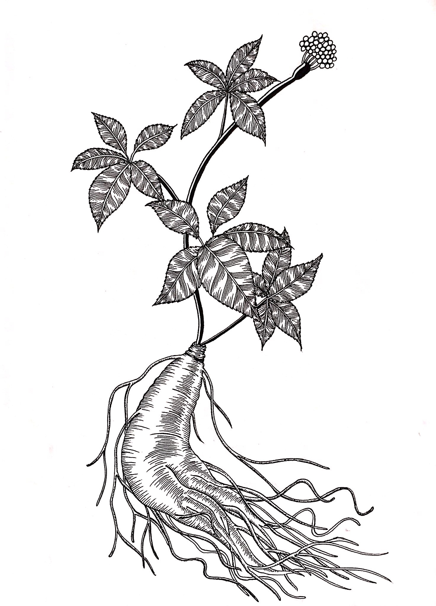 黑白植物线描装饰画_植物线描装饰画_植物线描装饰画分享展示