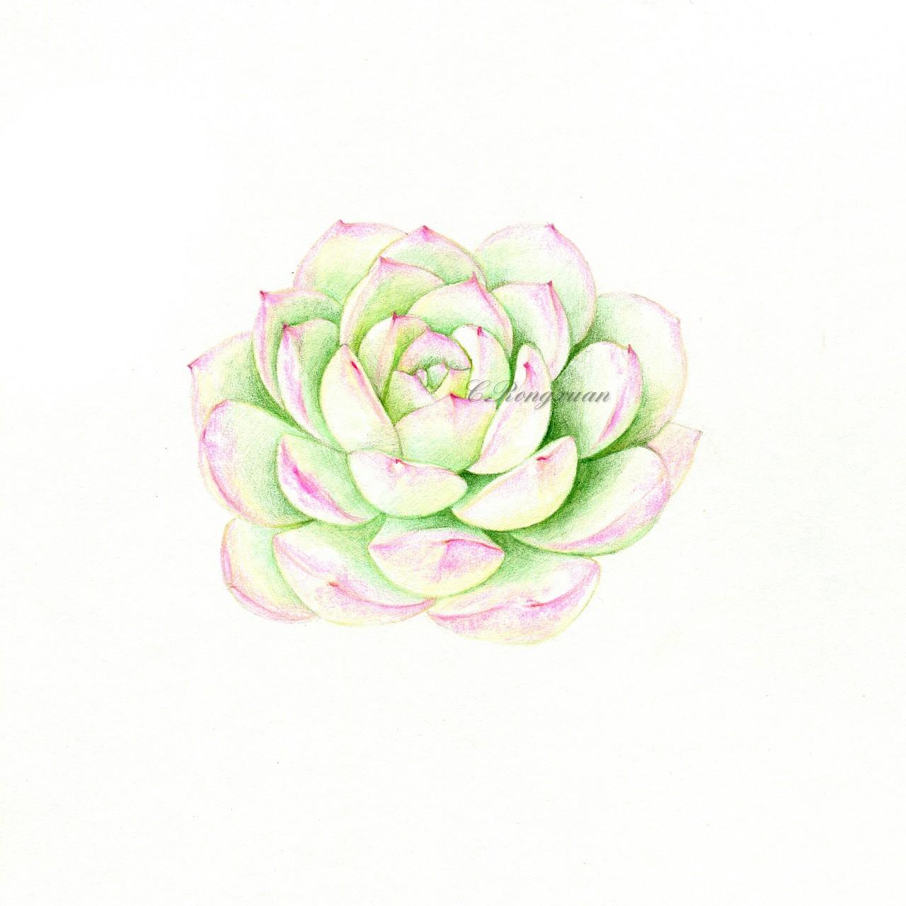 【溶萱手绘――彩铅多肉】水晶果冻莎莎