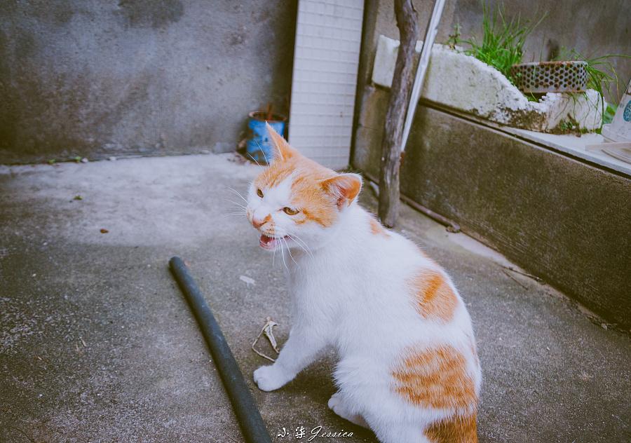 少女猫与屌丝狗