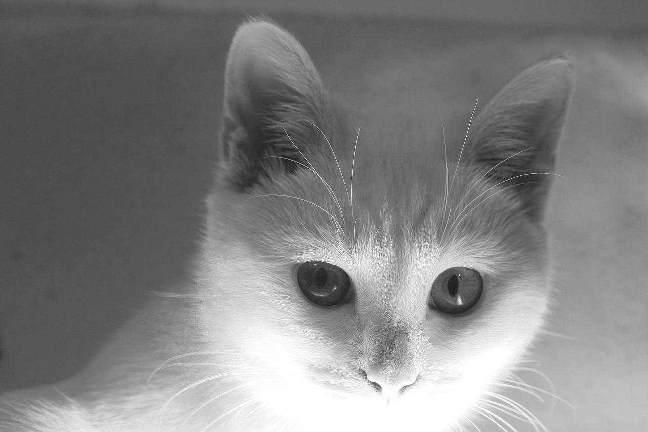 我是牛奶,我是喵咪 摄影 动物 愿为菩提果 - 原创作品