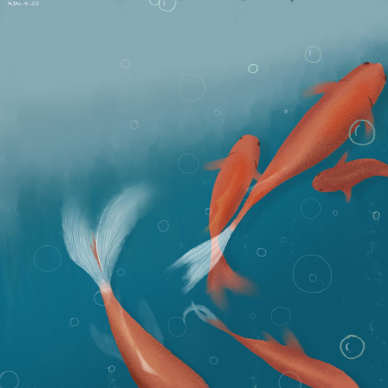 手绘锦鲤 办公室的鱼