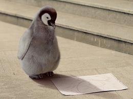 企鹅号品牌广告——让世界看到你