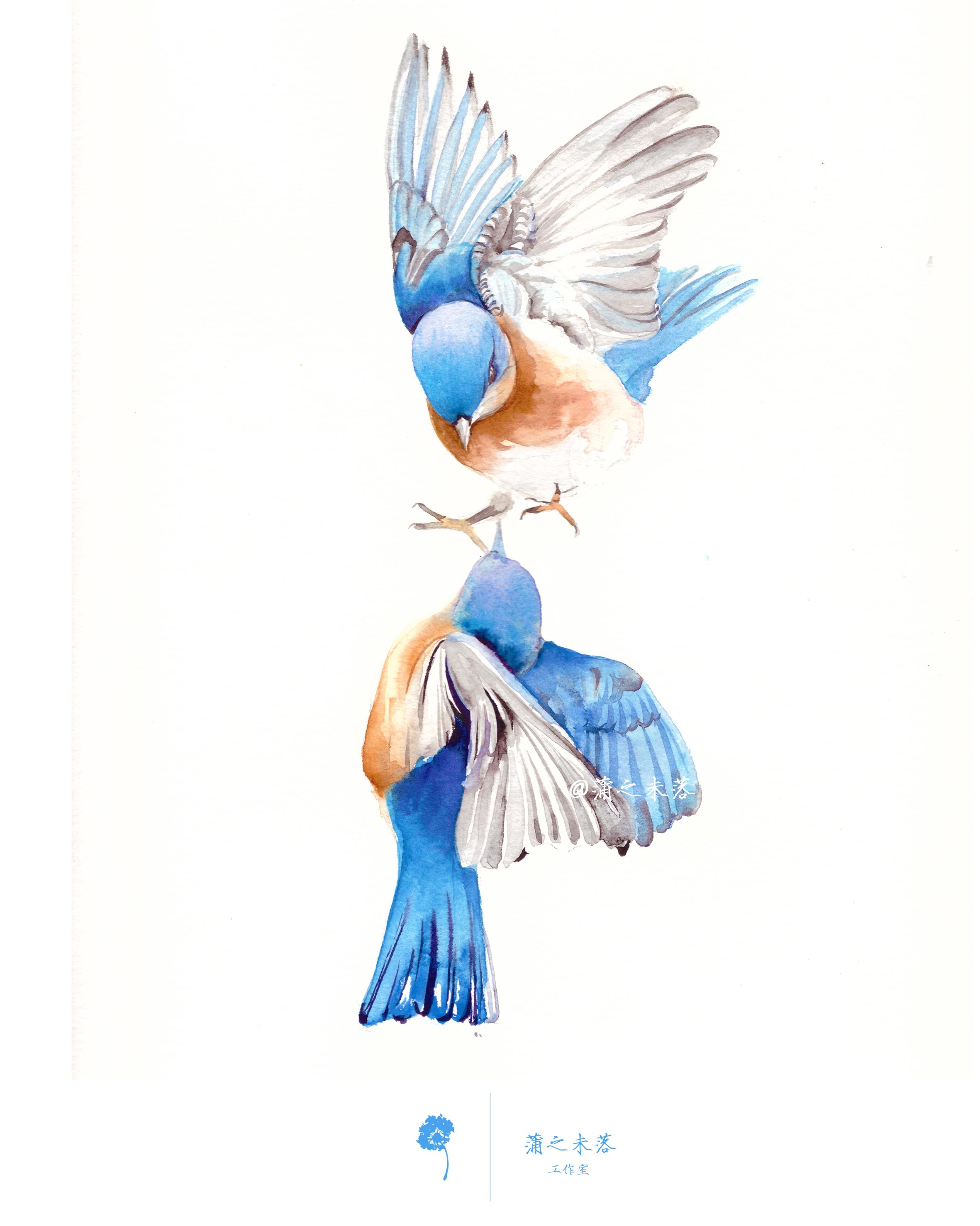 水彩手绘--鸟