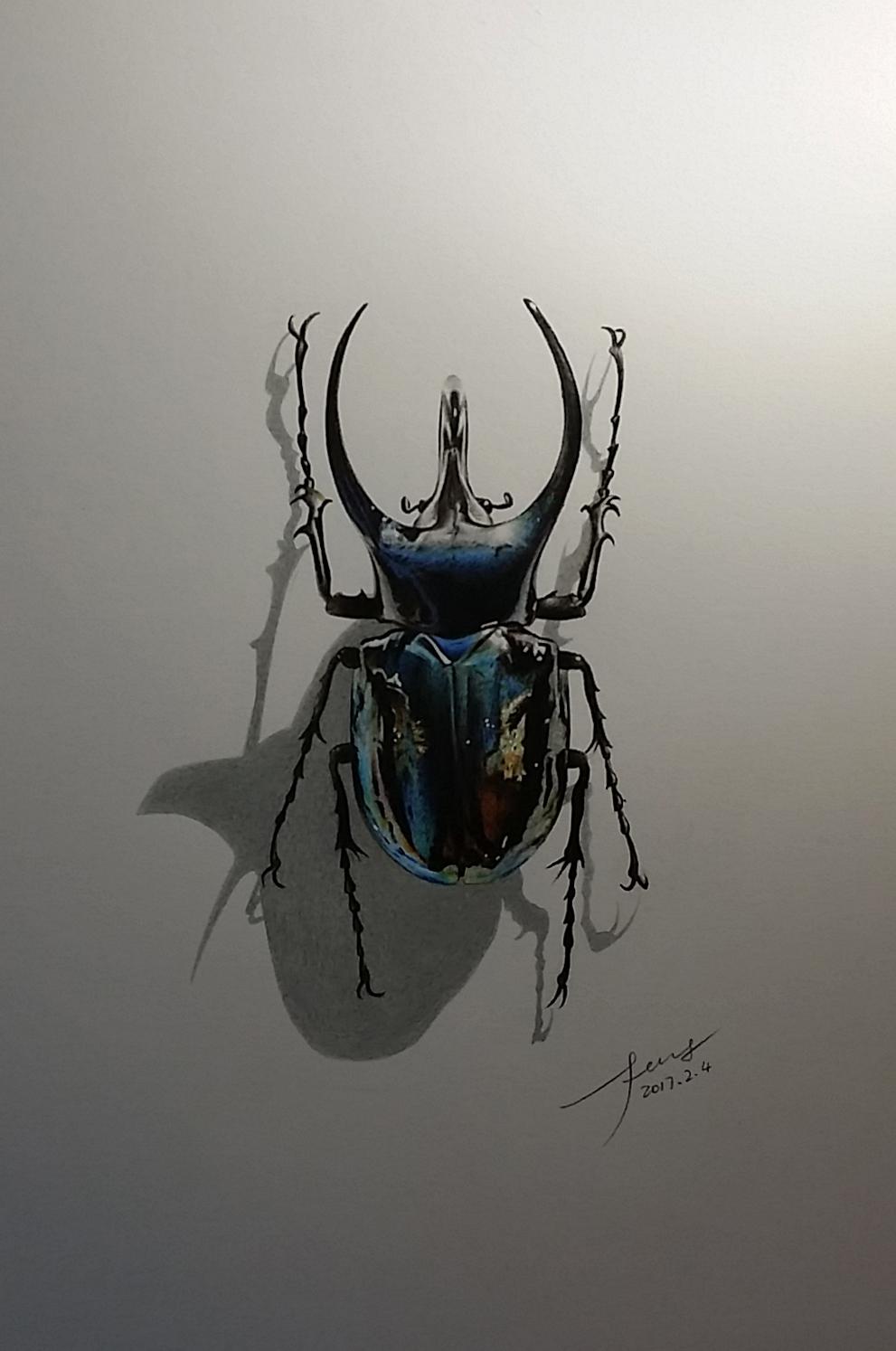 彩铅手绘—甲壳虫