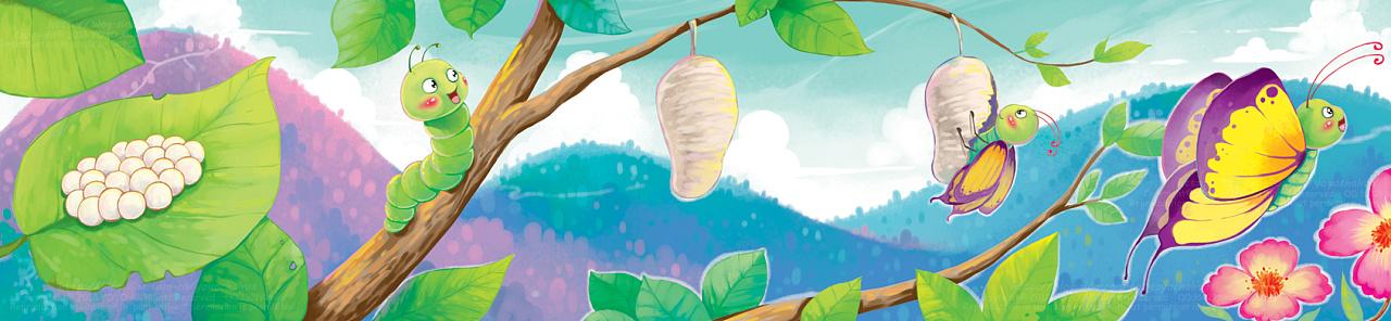 蝴蝶成长过程图片