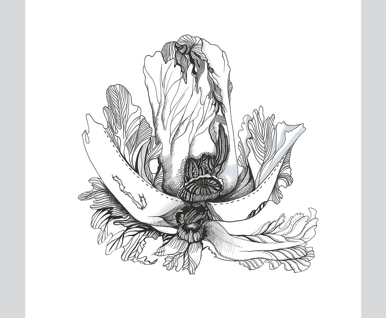 创意图形设计系列——白菜