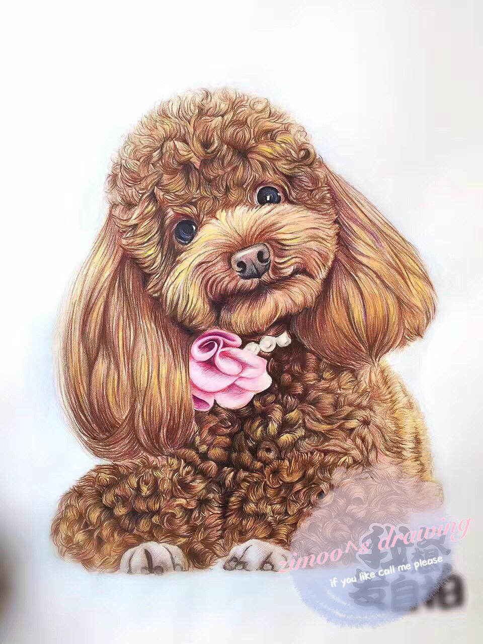 手绘彩铅动物——泰迪
