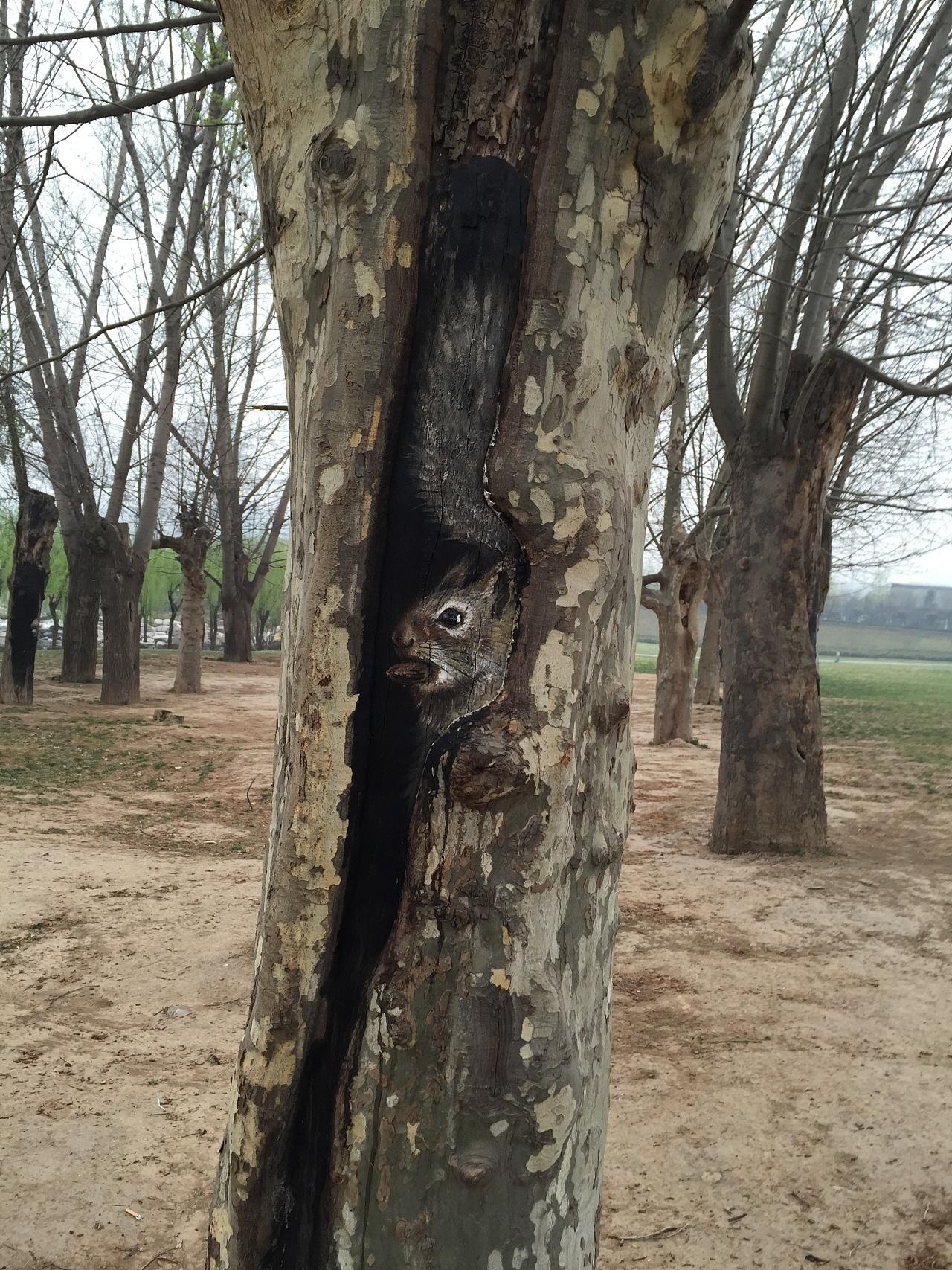 树洞画5-小松鼠