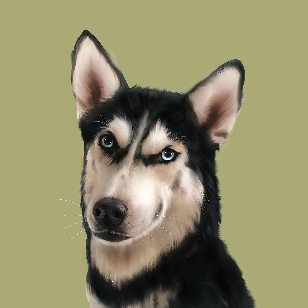宠物手绘 宠物插画 二哈 哈士奇