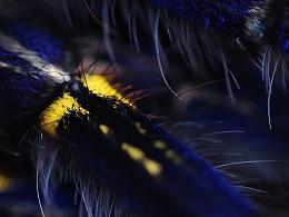捕鸟蛛摄影