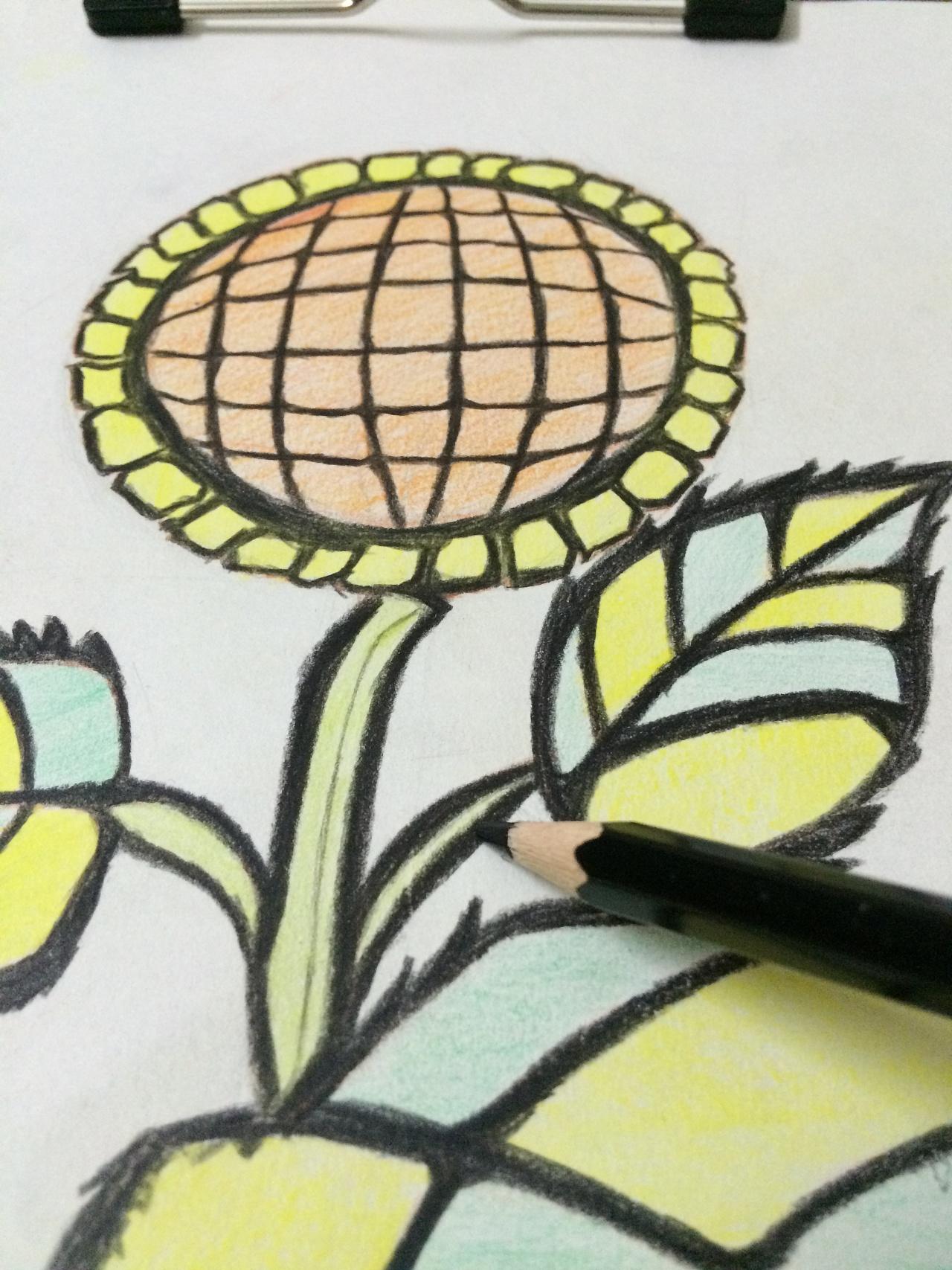 向日葵色铅笔画