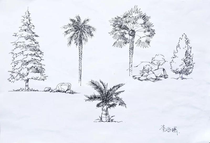 植物手绘立面