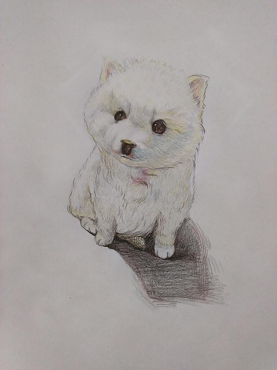 小狗狗(彩铅随笔)