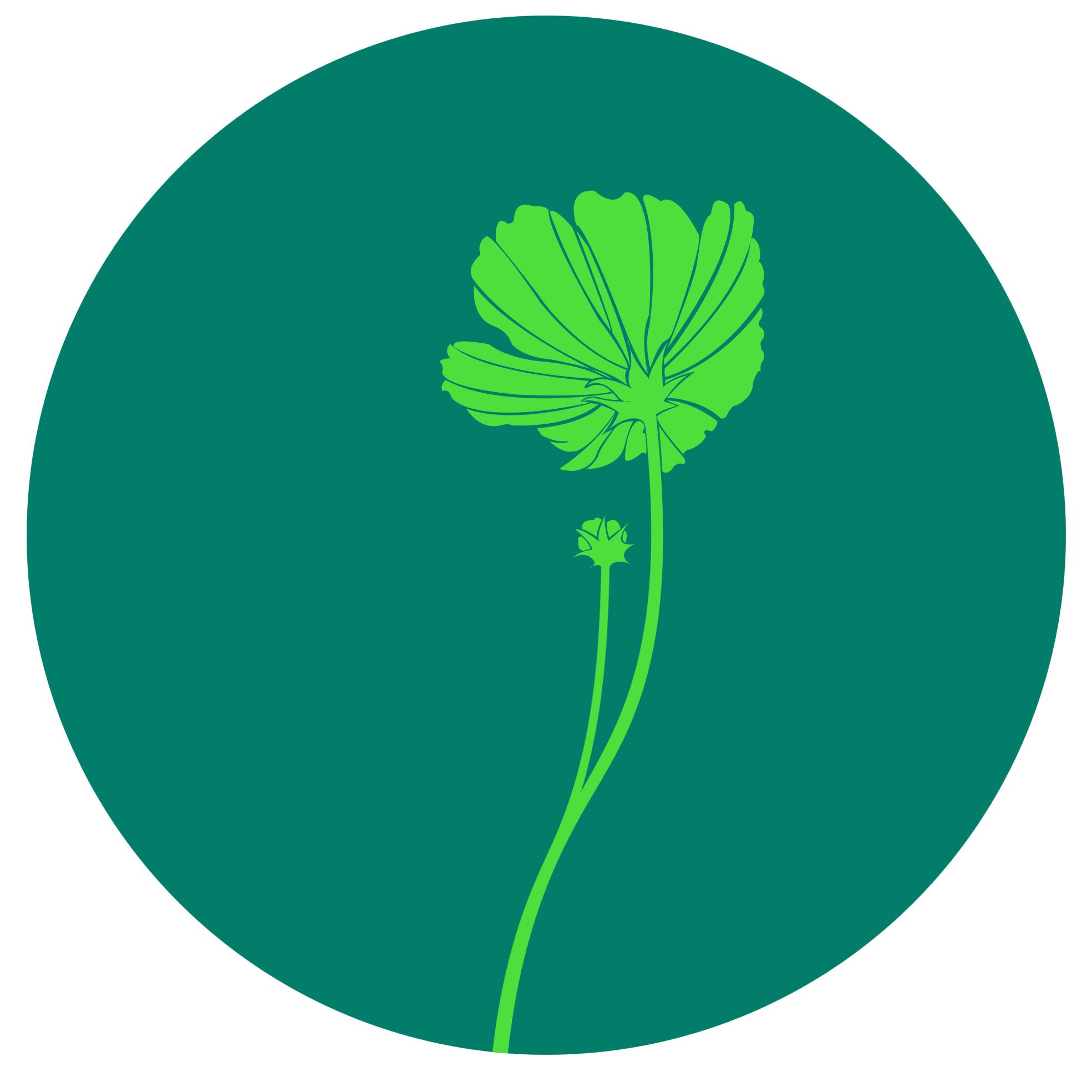 裸子植物/蕨类植物/苔藓植物/藻类植物/藤本植物/单双子叶植物等等.