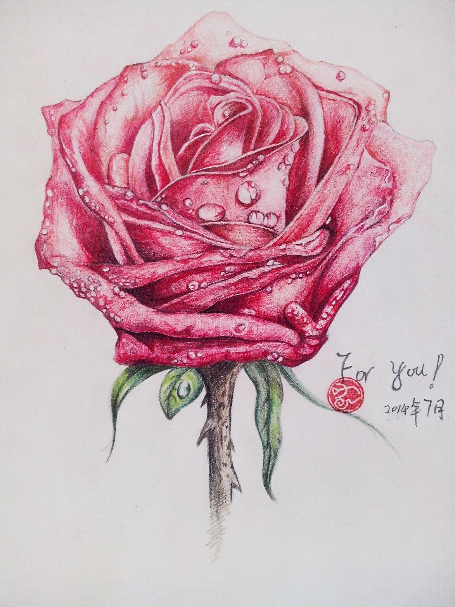 彩铅玫瑰花(临摹)图片