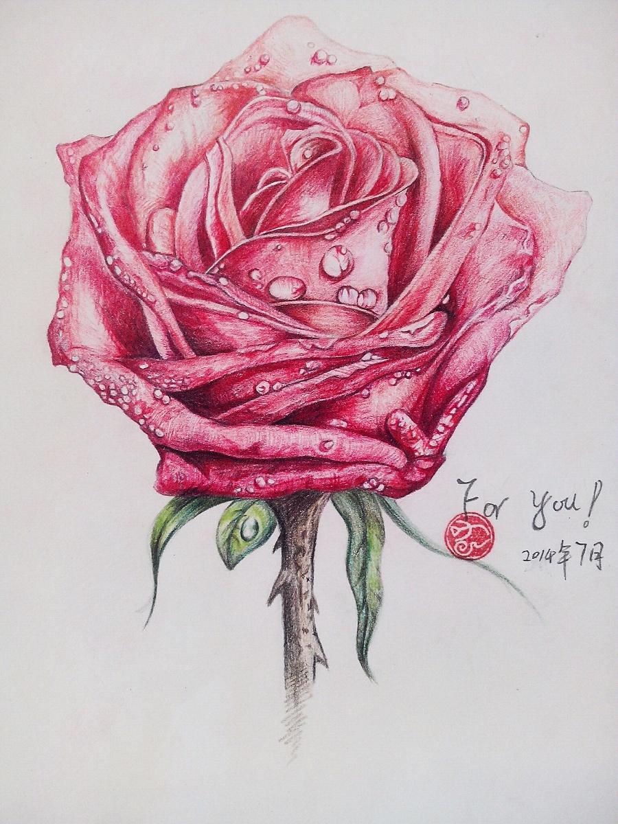 彩铅玫瑰花(临摹)|商业插画|插画|贰云