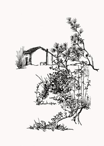手绘简笔画树木