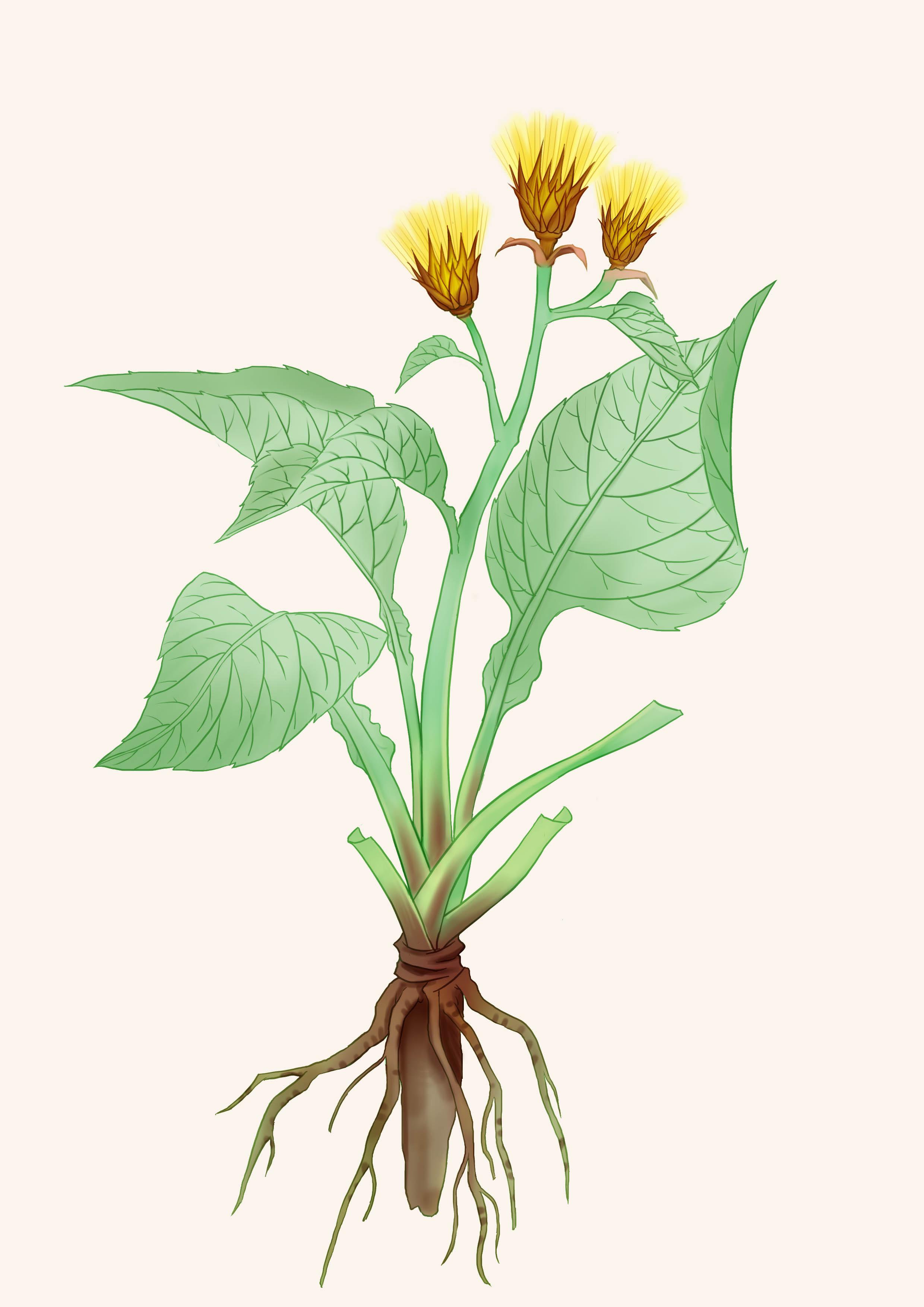 一组小清新的植物