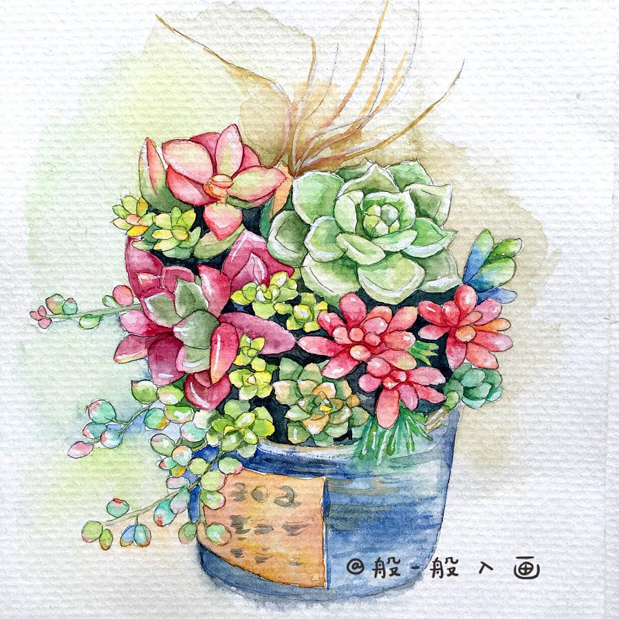 多肉植物水彩手绘|绘画习作|插画|mimiting