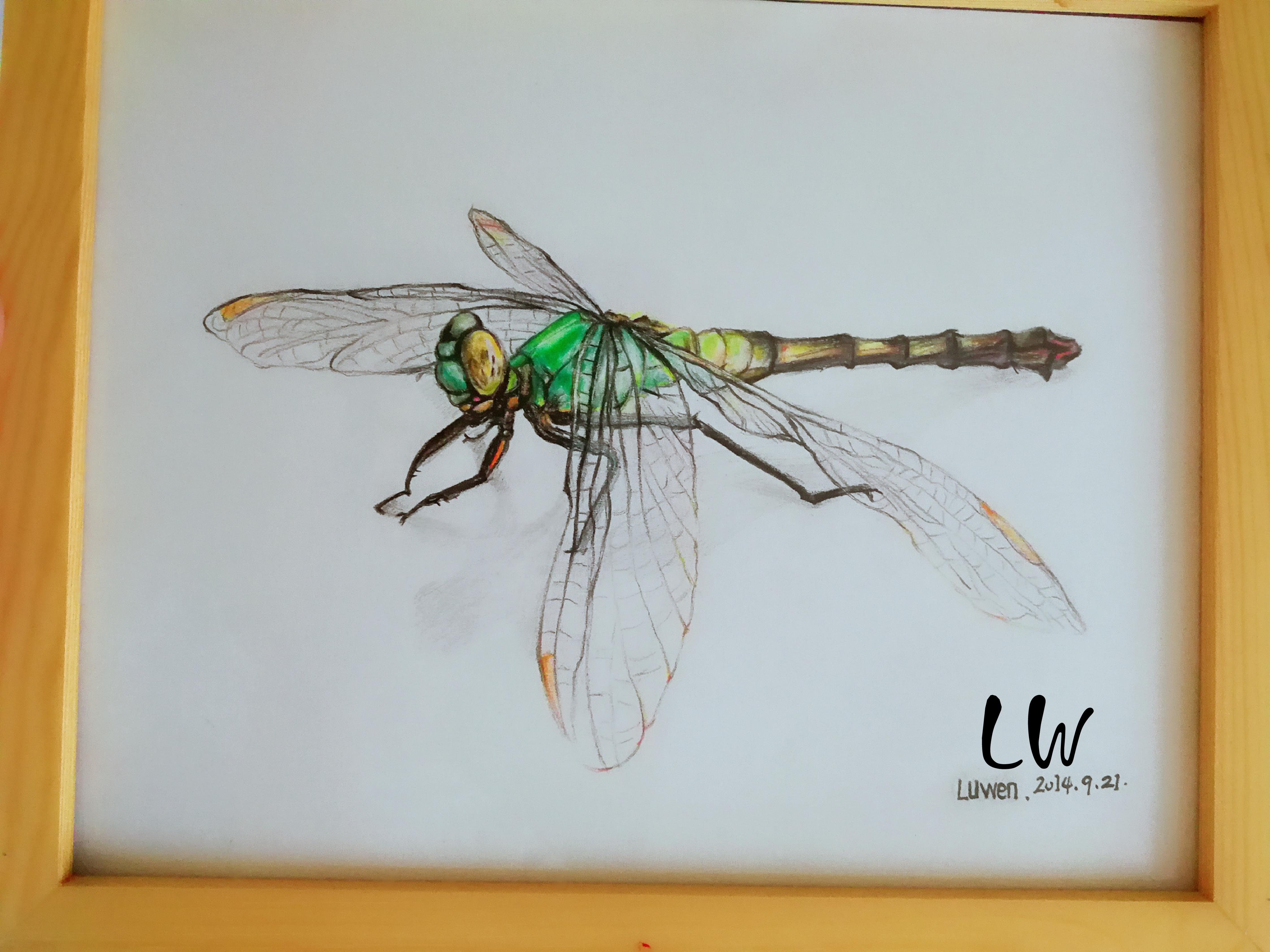 手绘彩铅小蜻蜓