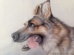 姜宏伟最新工笔动物画作品 狼