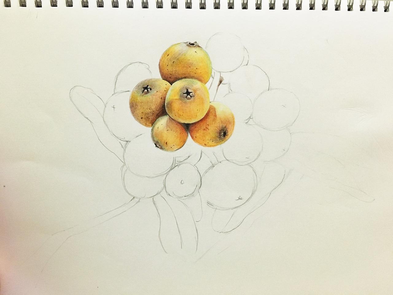 它的每一次开花结果我尽收眼底,结出的果子小小个,颜色艳丽刚好和叶